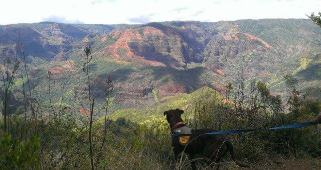 What To Do In Kauai – Take A Kauai Humane Society Field Trip!
