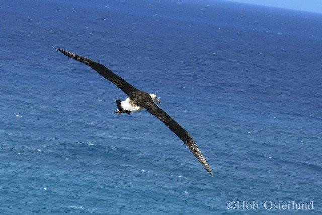 LAALflight2 - Hob Osterlund - Kauai