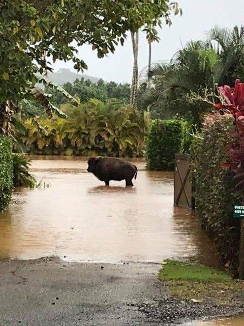 2018 Kauai Flood - Shantel Thornton