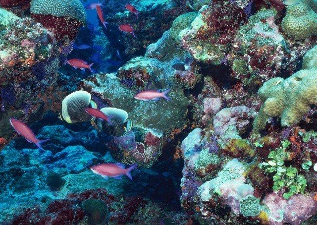 Reef Safe Sunscreens