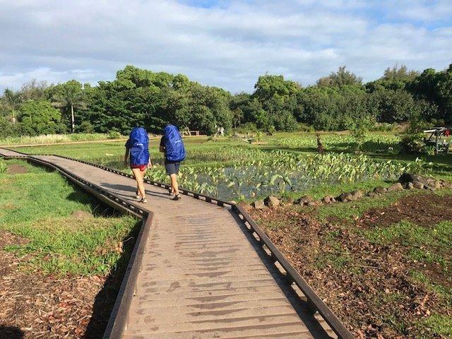 Kauai Road Opening