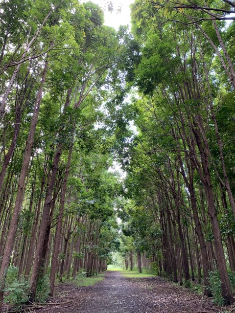 Wai Koa Trail